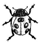 47_coleoptera.jpg