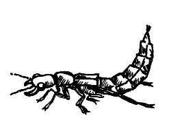 49_coleoptera.jpg