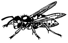 61_hymenoptera.jpg