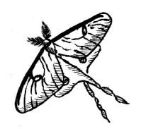 66_lepidoptera.jpg