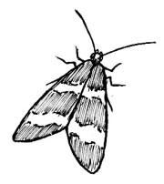 67_lepidoptera.jpg